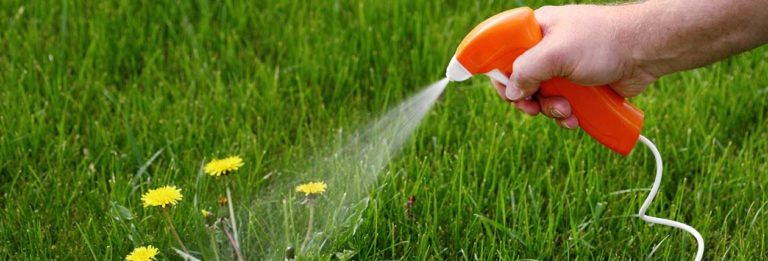 How to Fix an Ugly Lawn? Simple Steps – The10coa