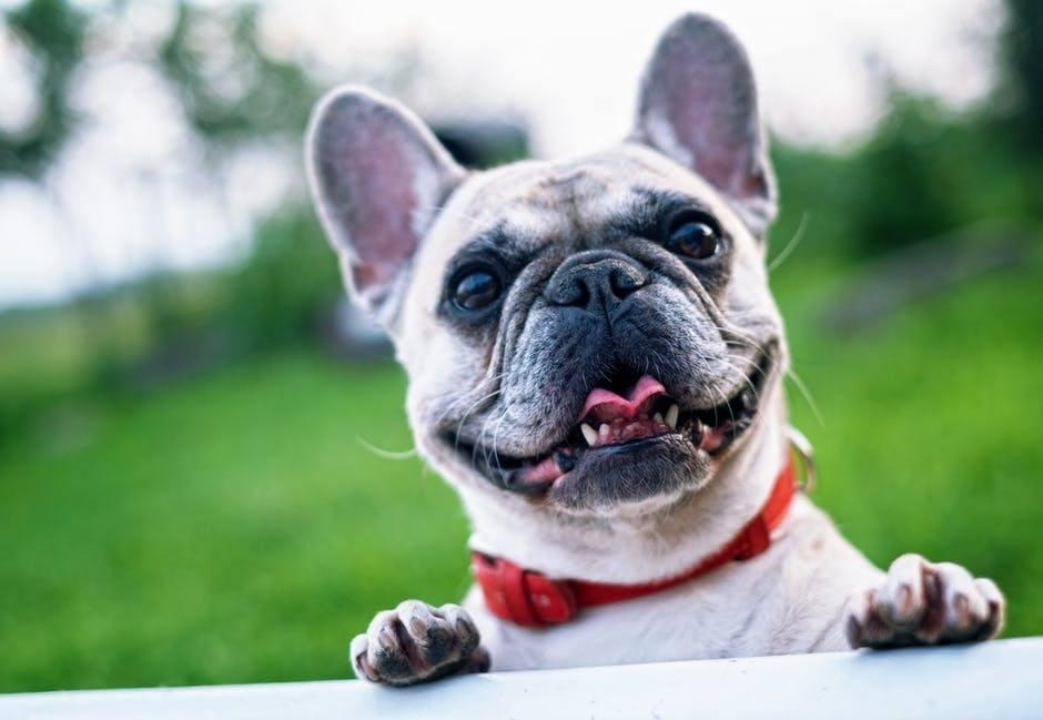 Pet Tax Deductions