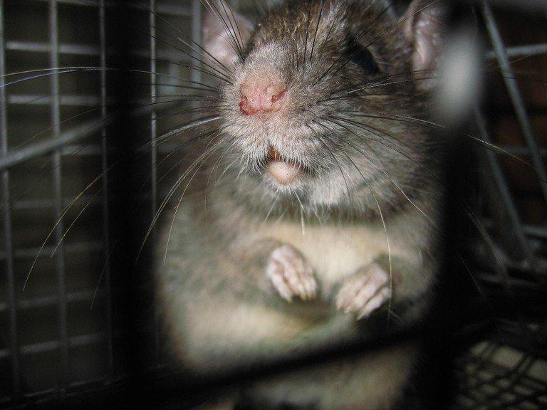 The best humane pest control techniques